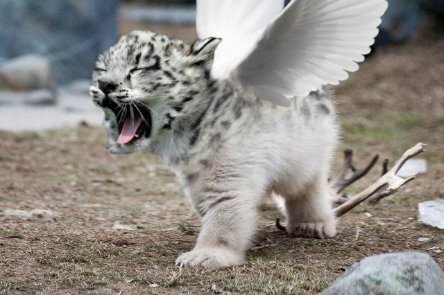 Save Tigers