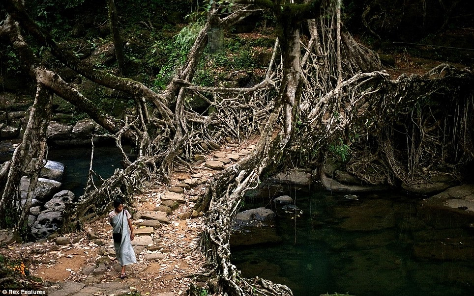Tree-Root-Bridge-Photo-by-Rex-Features