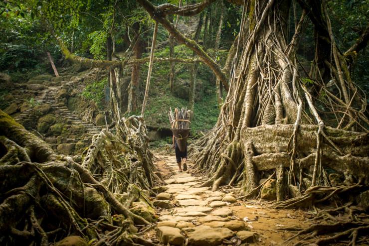 Tree-Root-Bridge3-740x494