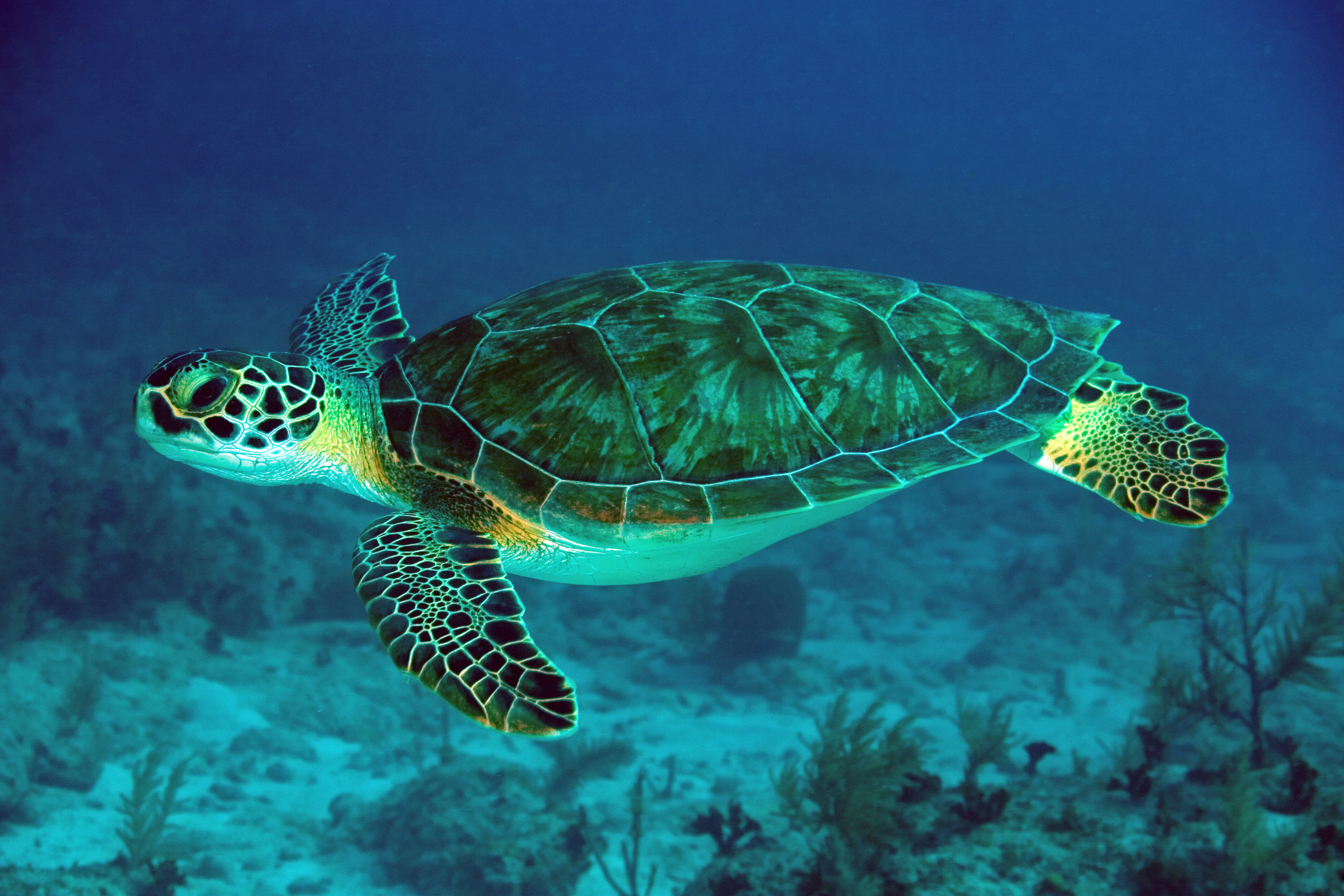- Lets Learn About Green Sea Turtles. – Journal Edge