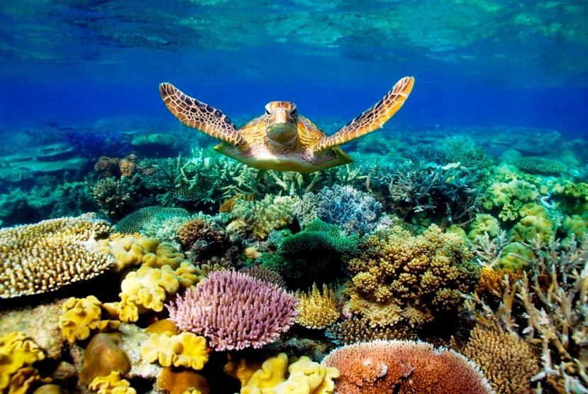 barrier-reef@journaledge