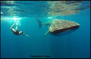Making Friends with the Fishes - Photograph by Ocean Tours
