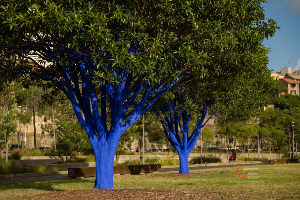 The blue trees 2