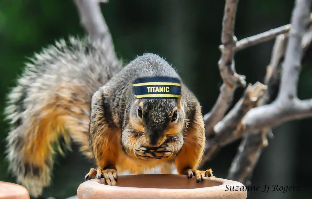 The Titanic Squirrel