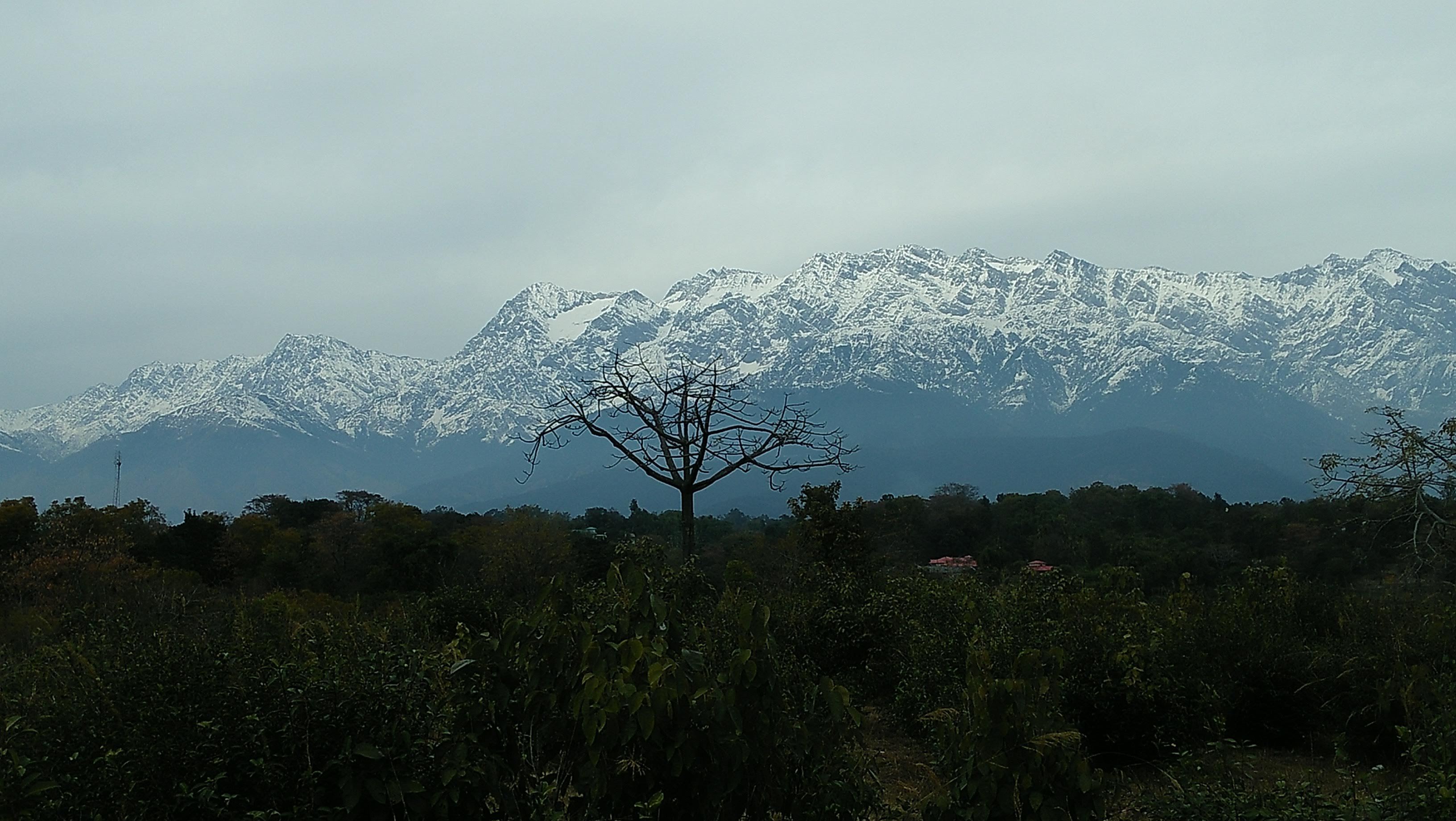 Escape to Palampur in 2020-Summers.